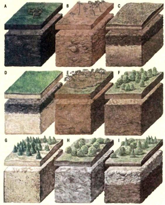 Классификация почв России