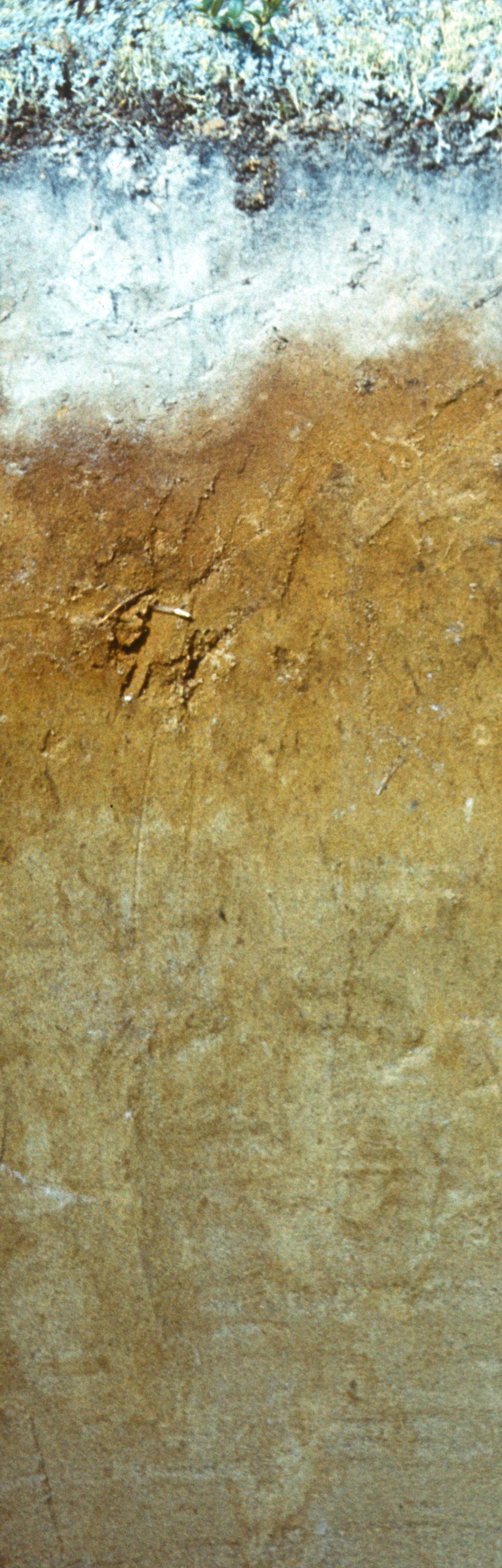 Цвета и фактура почвы