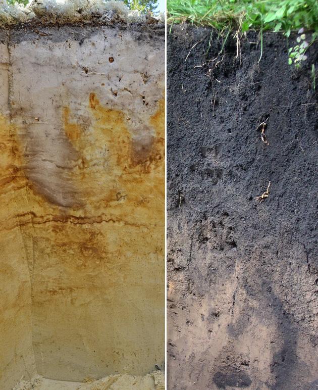 Сравнение мощности плодородного слоя  подзола и чернозема. Слева: подзол. Справа: чернозем.