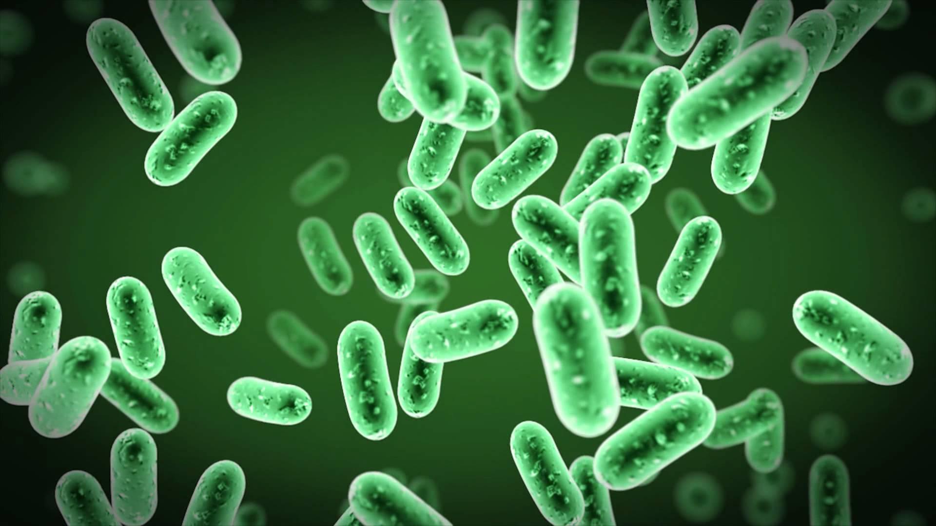 vozdeistvie-mikrobov-v2.orig