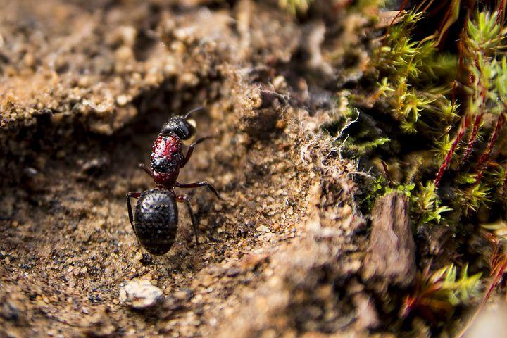 ants-2880060__480